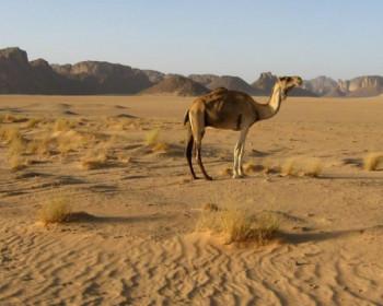 Специалисты советуют воздержаться от поездок в страны Ближнего Востока