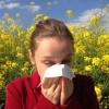 Изображение Российские ученые разрабатывают лекарства для лечения аллергии на березу, полынь и тимофеевку.