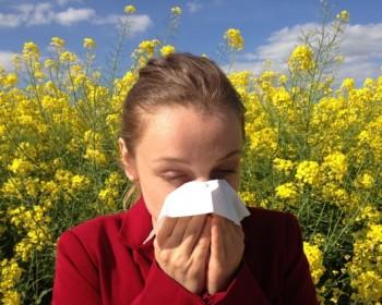 Российские ученые разрабатывают лекарства для лечения аллергии на березу, полынь и тимофеевку.