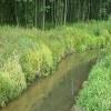 Изображение Подготовка к расчистке реки Куновки началась в Талдомском районе